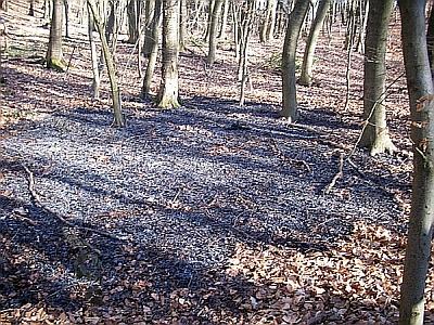 Zündler legen Feuer im Hortwald