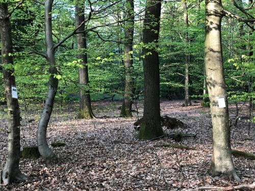 Lyrischer Waldspaziergang