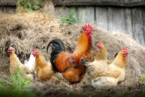 Meldepflicht von Nutztieren
