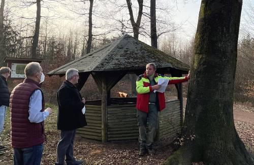 Geschädigte Bäume müssen entnommen werden